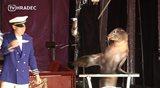 Cirkus Prince láká diváky na netradiční představení lachtanů